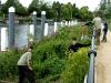 Teddington Lock Balsam