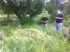 Balsam bash at Teddington