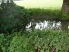 Tidal Thames Backwater 12/06/2011