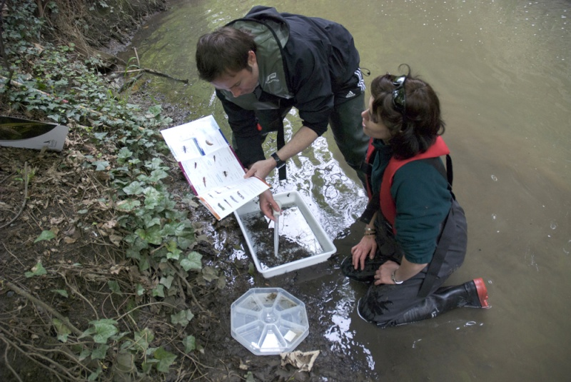 Riverfly Monitoring | Thames Anglers' Conservancy