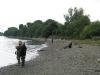 Tidal Fish-in Barnes 2013