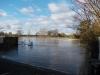 Massive Tidal Thames Perch