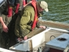 Thames Fish Surveys 2013