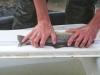 Thames Fish Surveys 2013