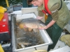 Fish Surveys